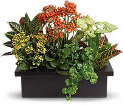 Plantes - Assortiment sophistiqué de plantes