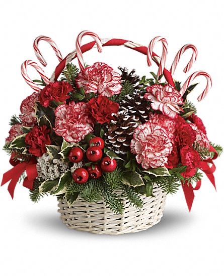 Candy Cane Christmas Flowers Flower