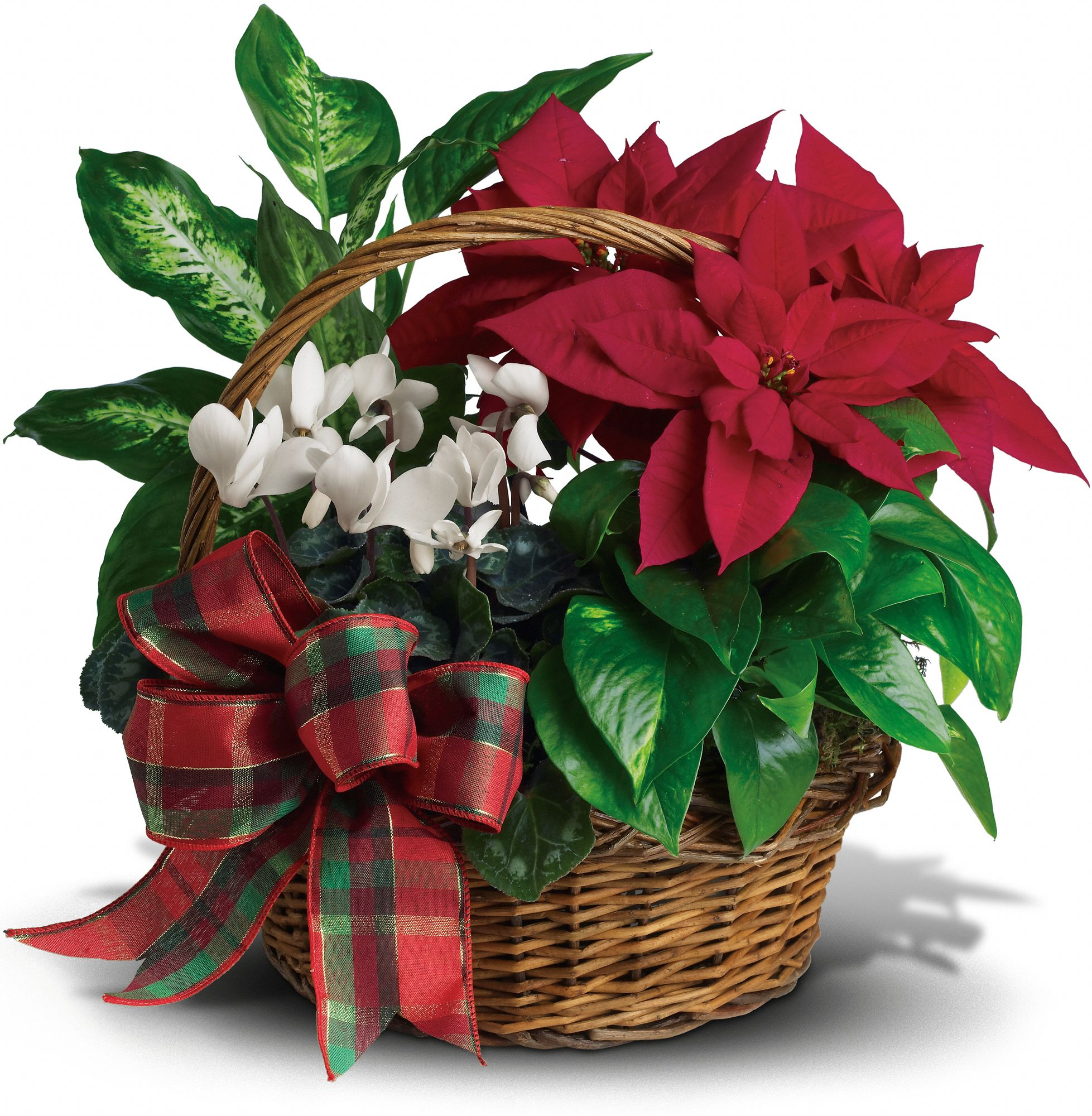 Holiday Homecoming Basket of Plants