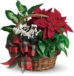 Holiday Homecoming Basket Plants