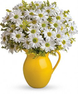 Sunny Day Pitcher of Daisies Flowers