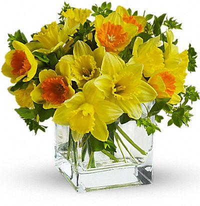 Teleflora's Daffodil Dreams