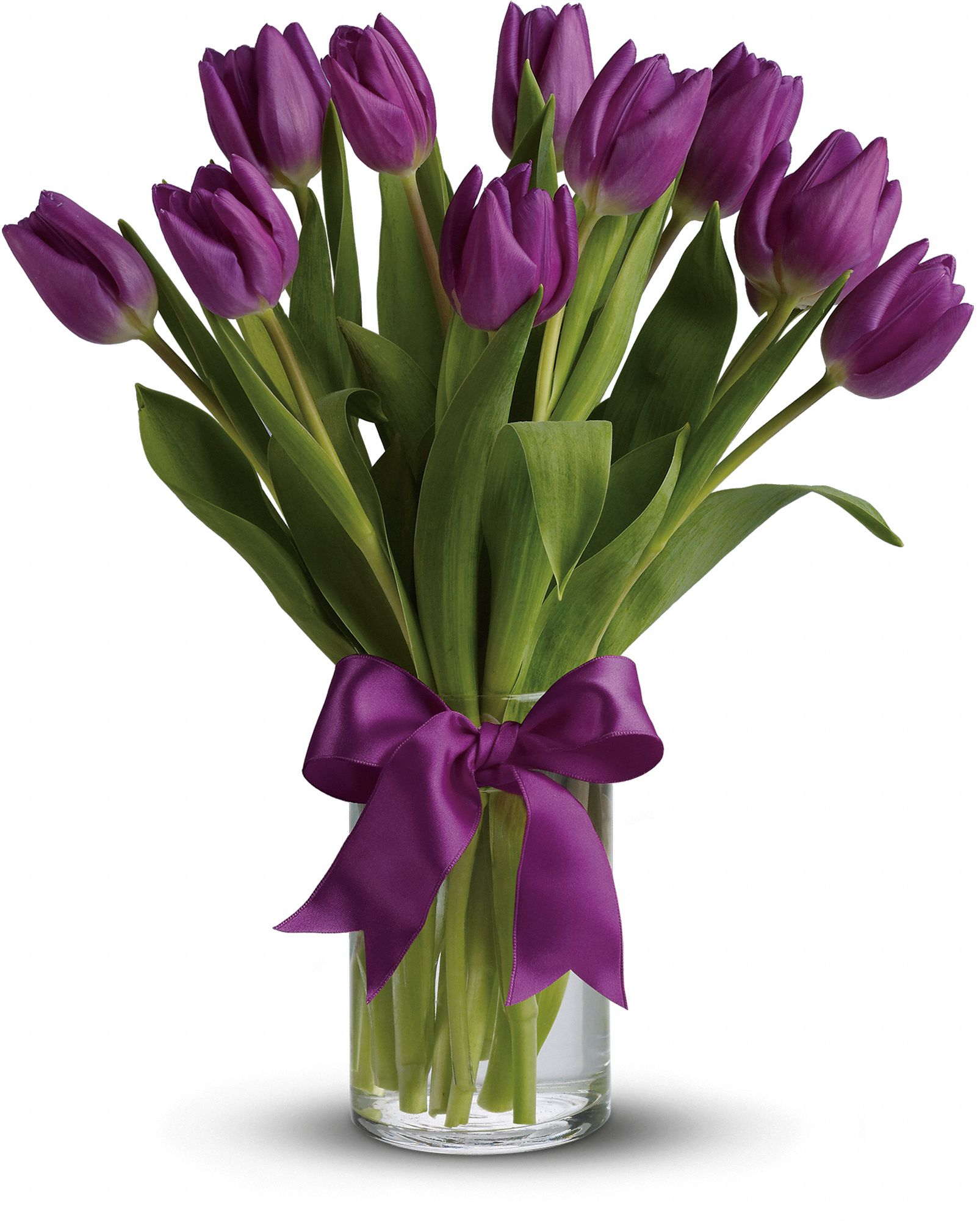 passionate purple tulips flowers, passionate purple tulips flower, Natural flower