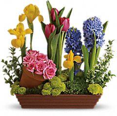 Bạn có thích mùa xuân