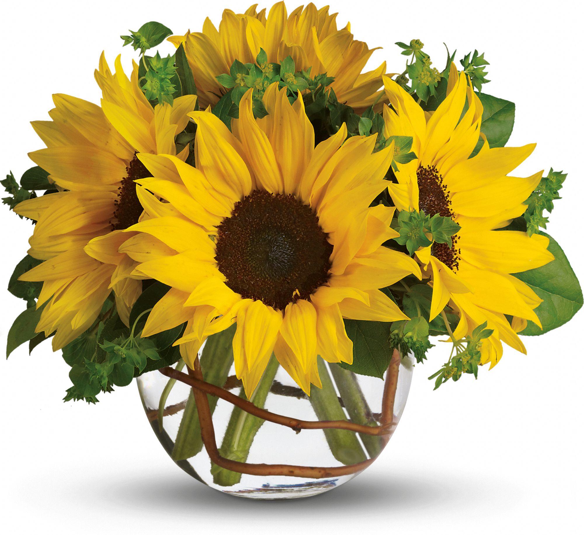 sunflower flower meaning  symbolism  teleflora, Natural flower