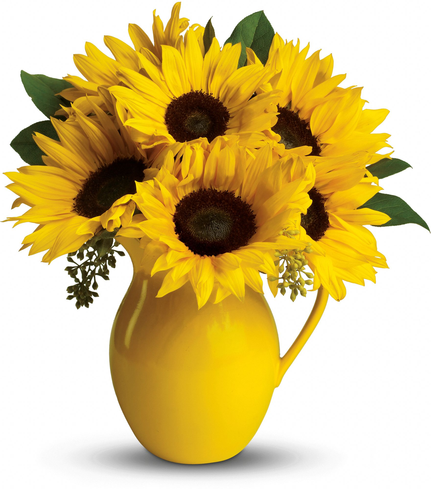 fresh-cut sunflowers in a lemonade pitcher