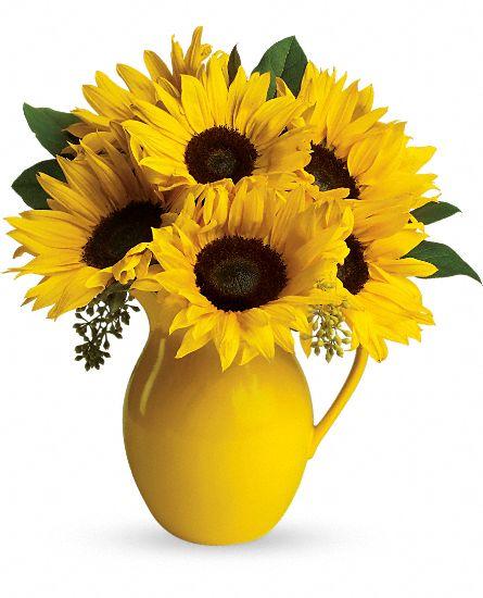 fresh-cut sunflowers in a lemonade pitcher