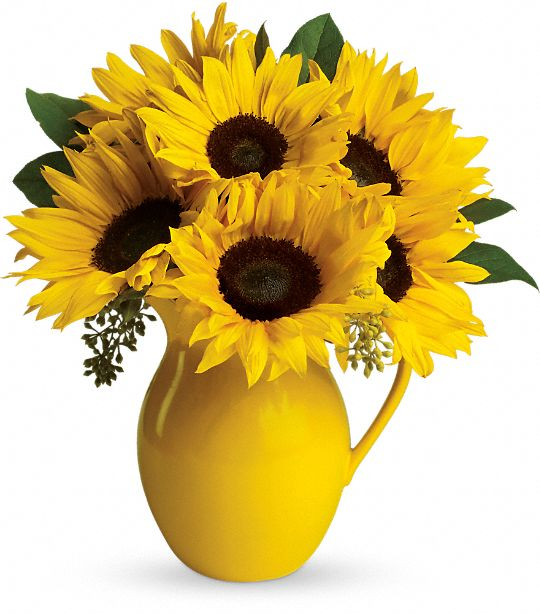Teleflora's Sunny Day Pitcher of Sun Flowers