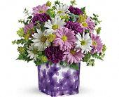 Teleflora's Dancing Violets Bouquet, picture