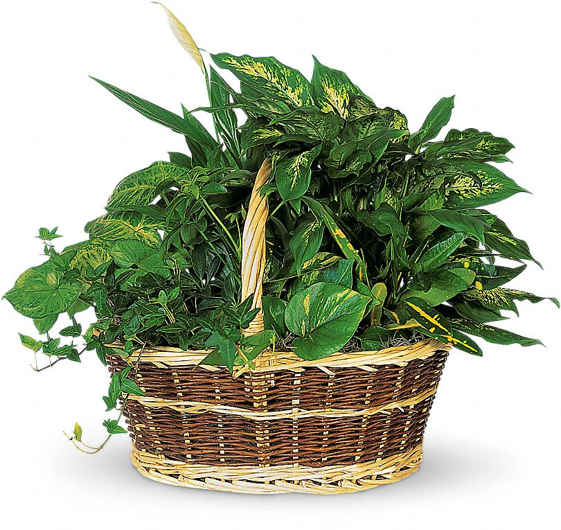 Large Basket Garden Plants