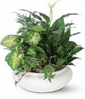 Plante en pot moyenne