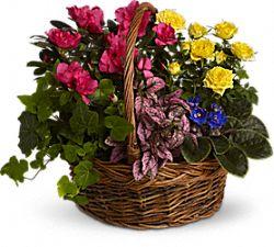 Panier de fleurs Jardin en éclosion