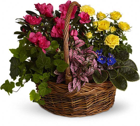 Blooming Garden Basket Flowers