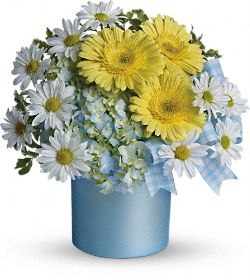 Teleflora's Once Upon a Daisy Flowers