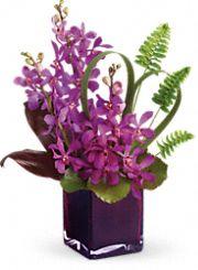 Shop for Orchids