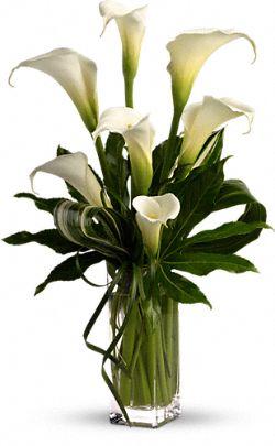 My Fair Lady Flowers