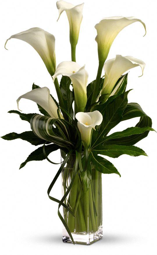 My Fair Lady by Teleflora Flowers