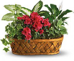 Plants Galore Plants