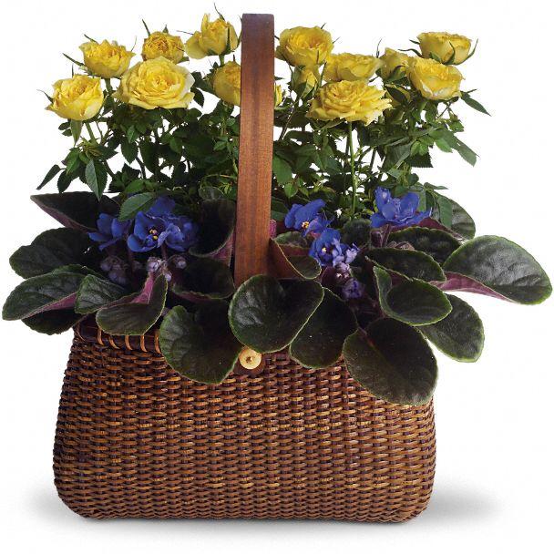 Garden To Go Basket Plants