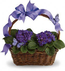 Violettes et papillons – Plantes