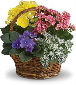 Spring Has Sprung Mixed Basket Plants