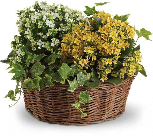 Basket of Joy Plants