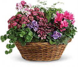 Panier de mélange de plantes Simplement chic – Plantes