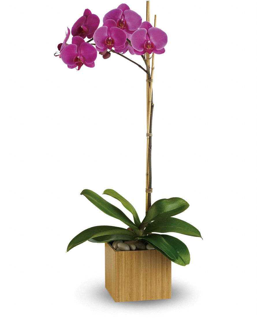Teleflora's Imperial Purple Orchid