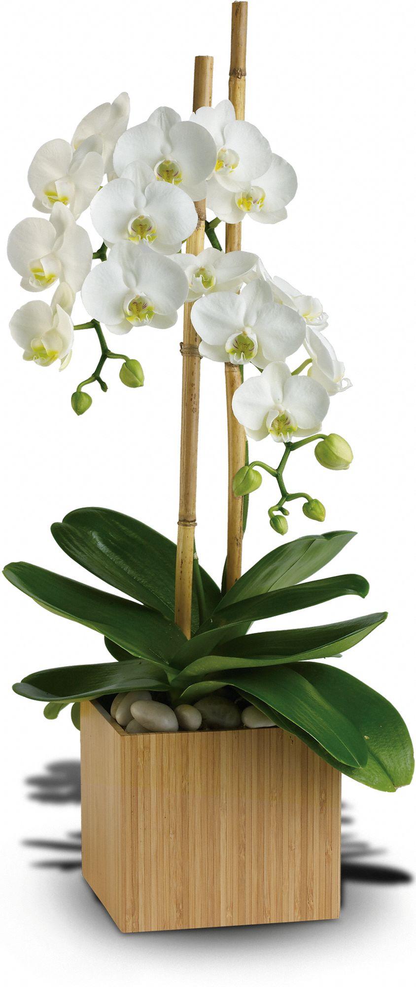Burst of Orchid Bouquet