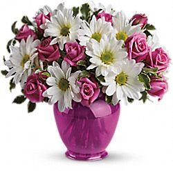 Fleurs Charmantes marguerites en rose