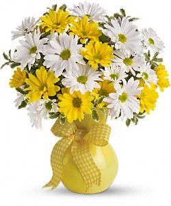 Fleurs Marguerites ensoleillées