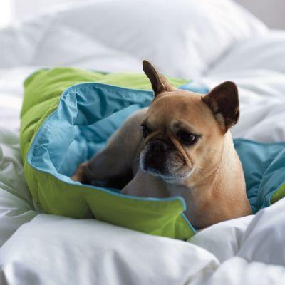 LaCrosse® Reversible Dog Comforter