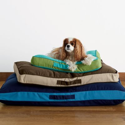 Company Cotton™ Memory Foam Dog Bed with Sunbrella® Cover - Large