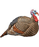 Hunter's Specialties H.S. Strut Jake Snood Turkey Decoy