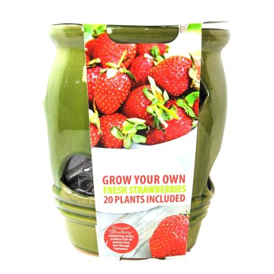 Ceramic Strawberry Planter with 20 Plants, Green.  Ends: May 25, 2016 5:00:00 AM CDT