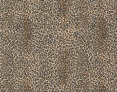 Leopard No Rose 2