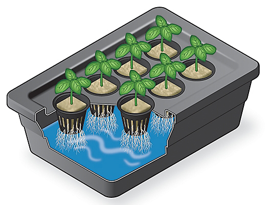 Correct set up of seedlings and rock wool in a hydroponic system