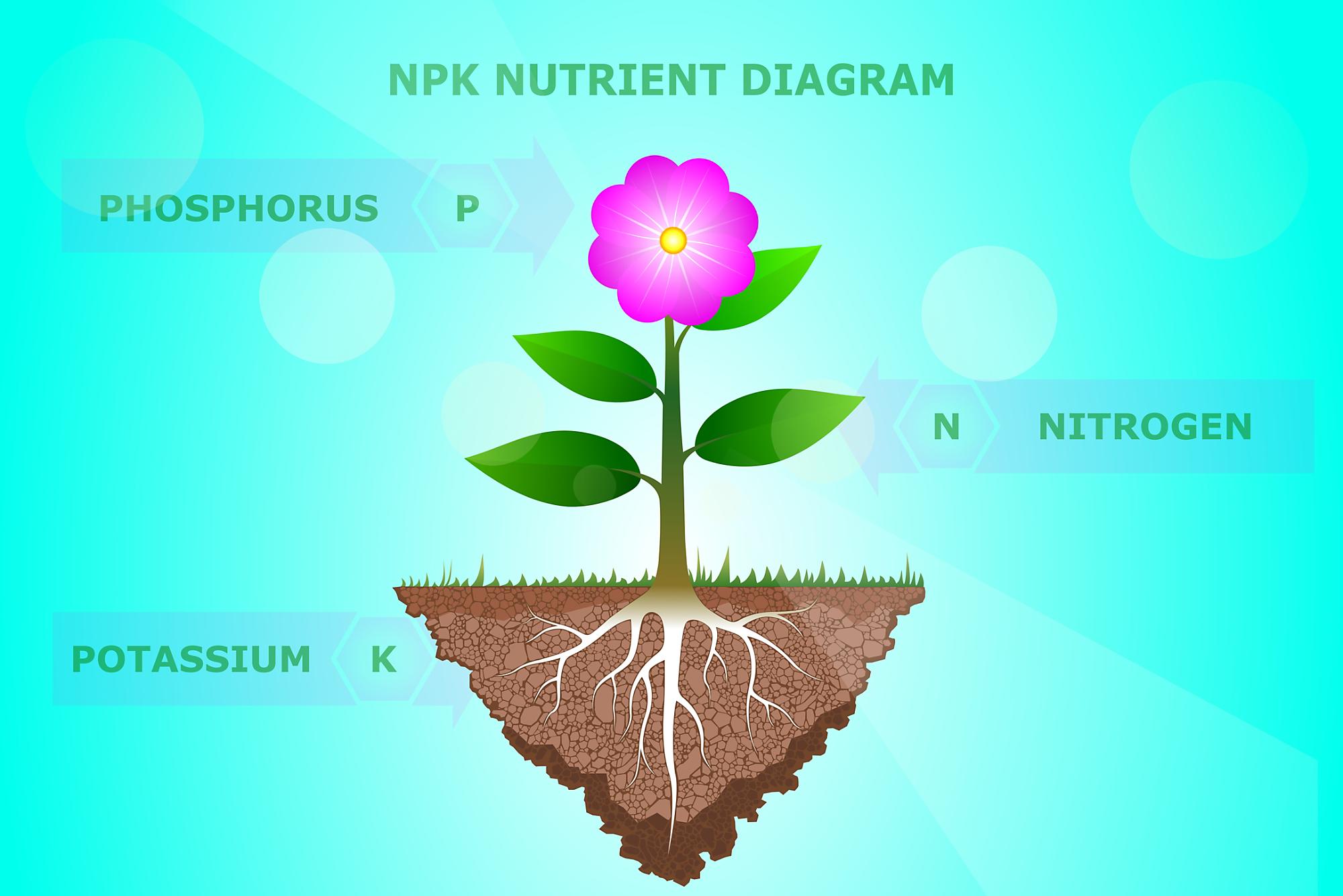 NPK meaning