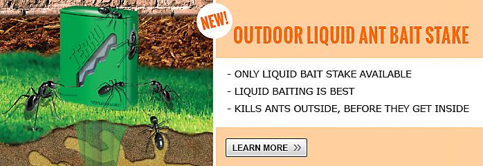 liquid ant bait stakes