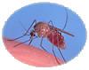 mosquitomagnet.com mosquito-borne diseases