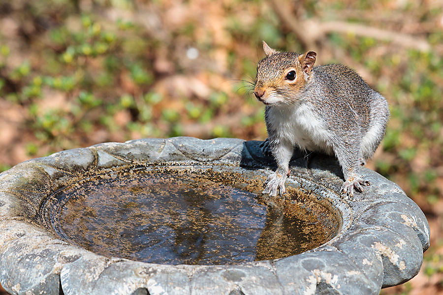 what to feed squirrels water