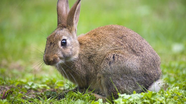 How to Keep Rabbits Out of Your Yard
