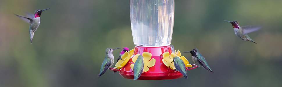 hummingbirds visiting hummingbird feeder