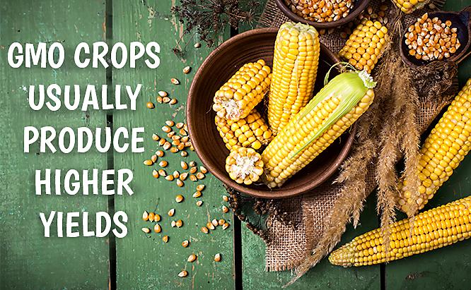 GMO benefits and drawbacks