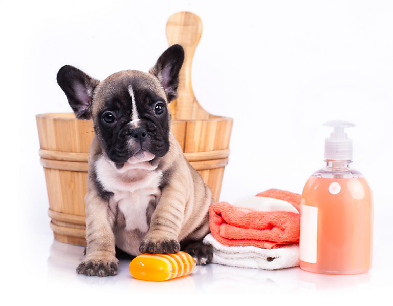 dog with cleaning supplies