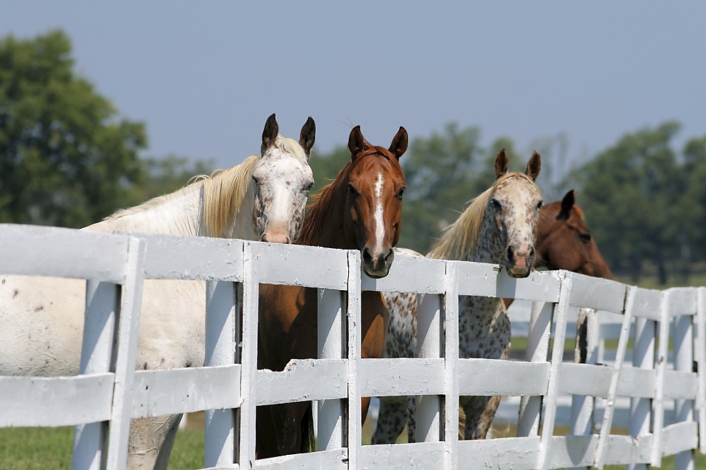 What Are The Best Horse Fencing Options