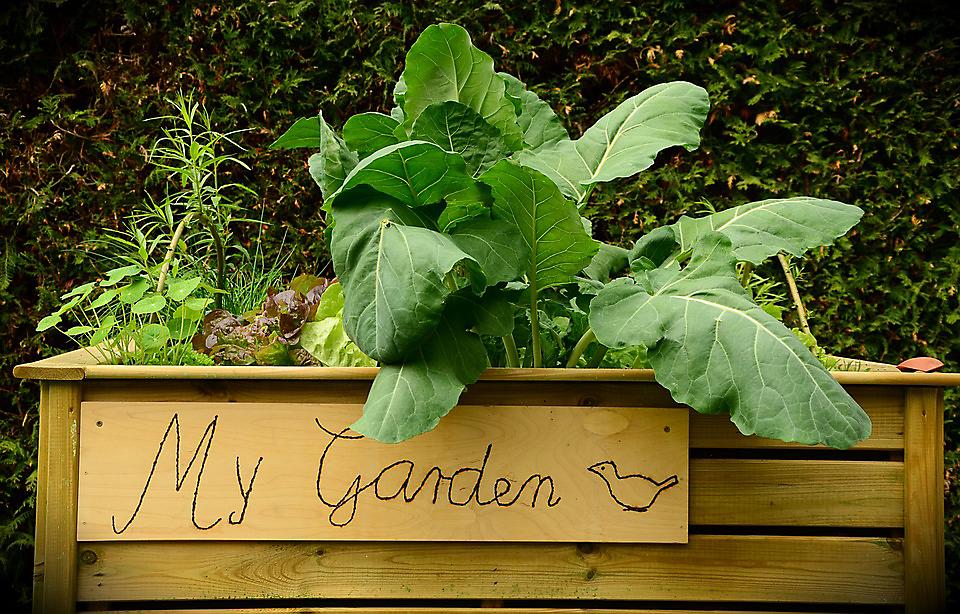garden bed container garden