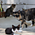 Feral Cat & Kittens