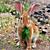 Bunny Eating Greens