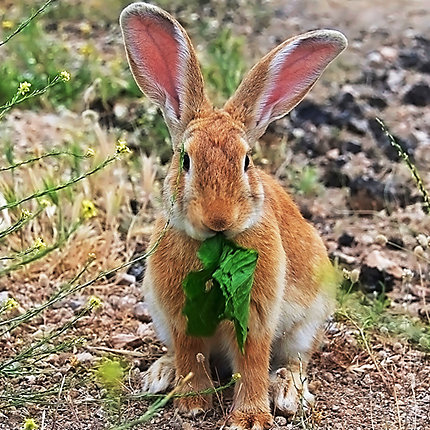 Other Photos: Bunny Eating Greens ...